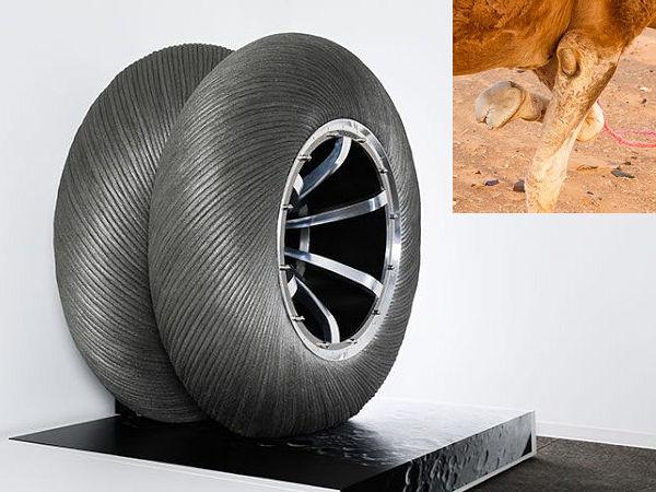 Bei seiner Reifenentwicklung für die Mondmission der japanischen Raumfahrtagentur JAXA zusammen mit Toyota als weiterem Partner hat sich Bridgestone eigenen Worten zufolge von den zwei Zehen der zur Gattung der Paarhufer zählenden Kamele inspirieren lassen (Bild: Bridgestone)